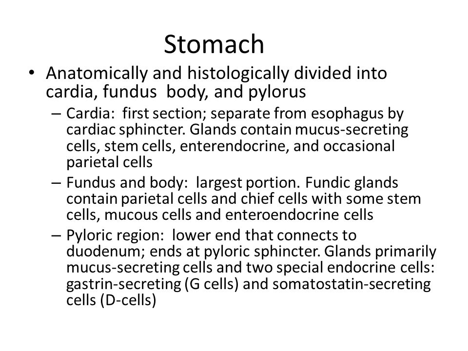 Stomach Anatomically and histologically divided into cardia, fundus body, and pylorus.