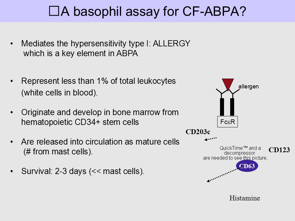 A basophil assay for CF-ABPA