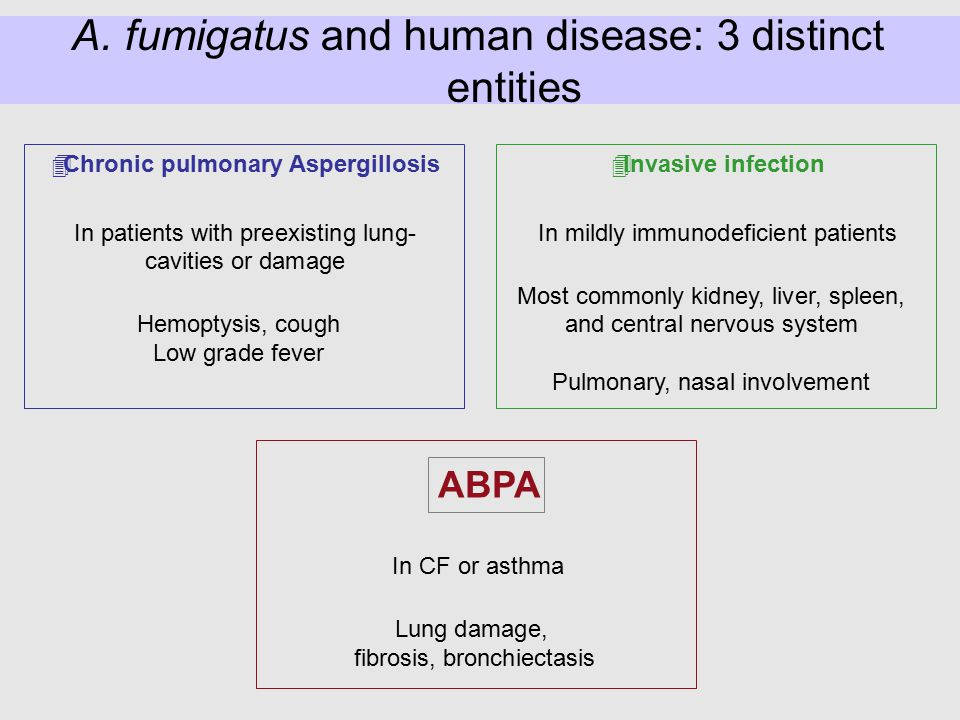 A. fumigatus and human disease: 3 distinct entities