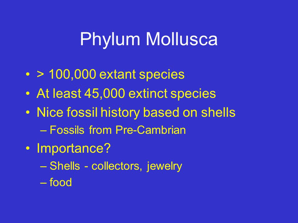 Phylum Mollusca > 100,000 extant species
