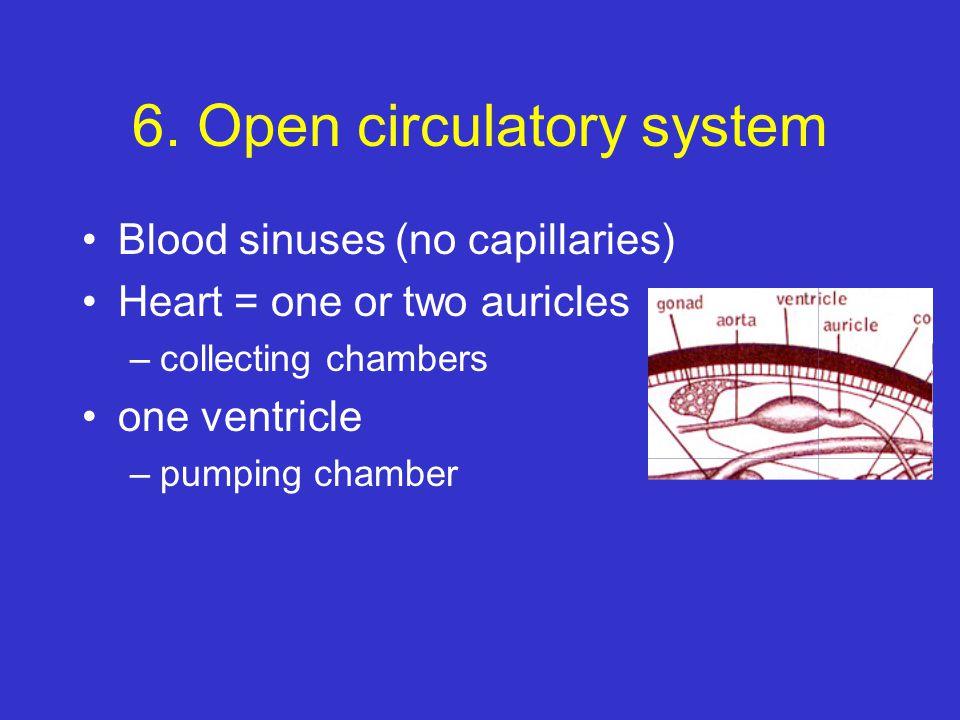 6. Open circulatory system