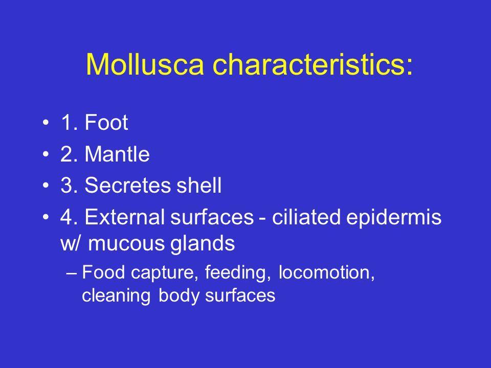 Mollusca characteristics: