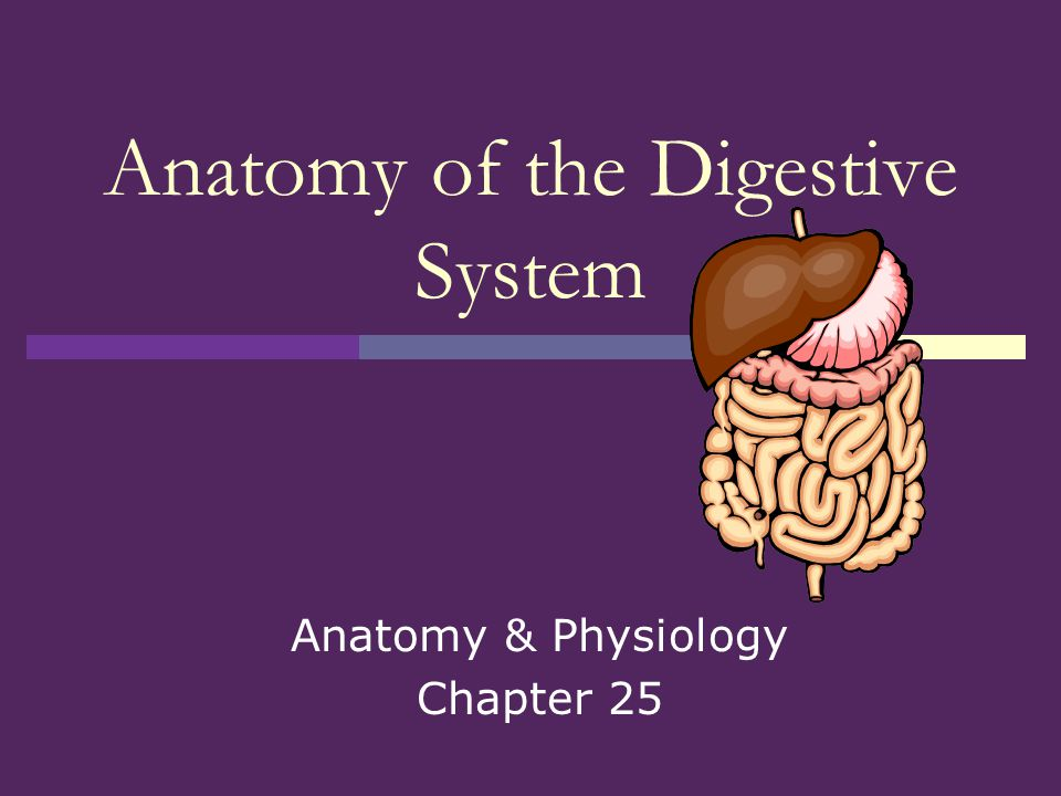Atemberaubend The Digestive System Anatomy And Physiology Galerie ...