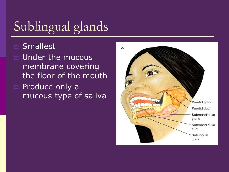 Sublingual glands Smallest