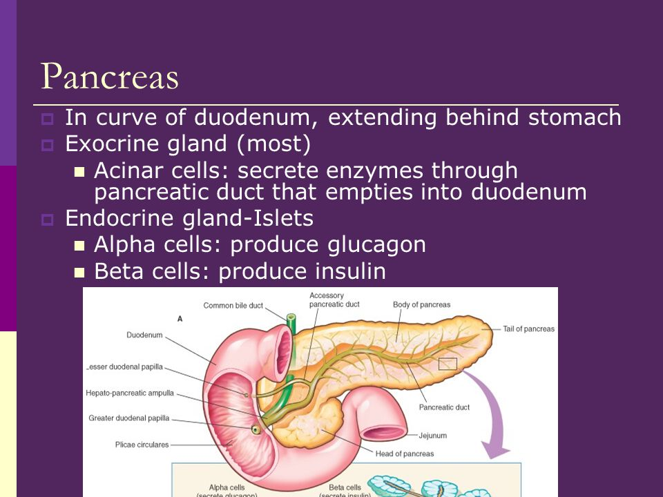 Pancreas In curve of duodenum, extending behind stomach