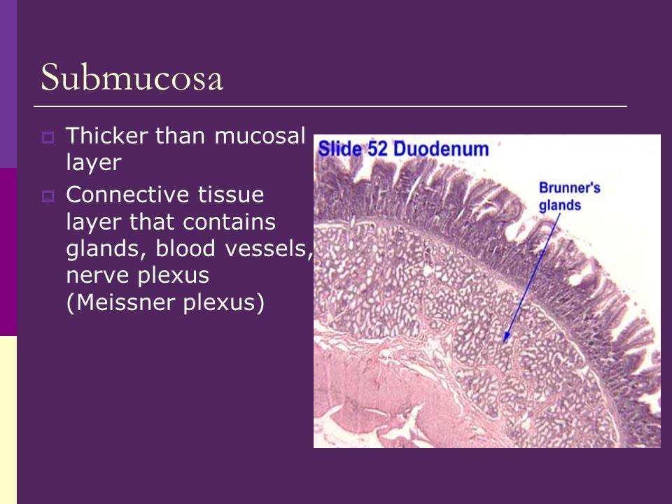 Submucosa Thicker than mucosal layer