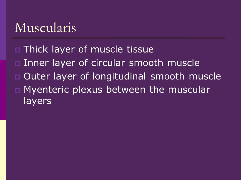 Muscularis Thick layer of muscle tissue