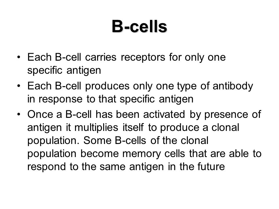 B-cells Each B-cell carries receptors for only one specific antigen
