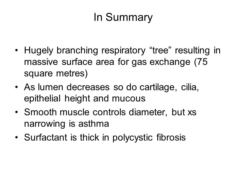 In Summary Hugely branching respiratory tree resulting in massive surface area for gas exchange (75 square metres)