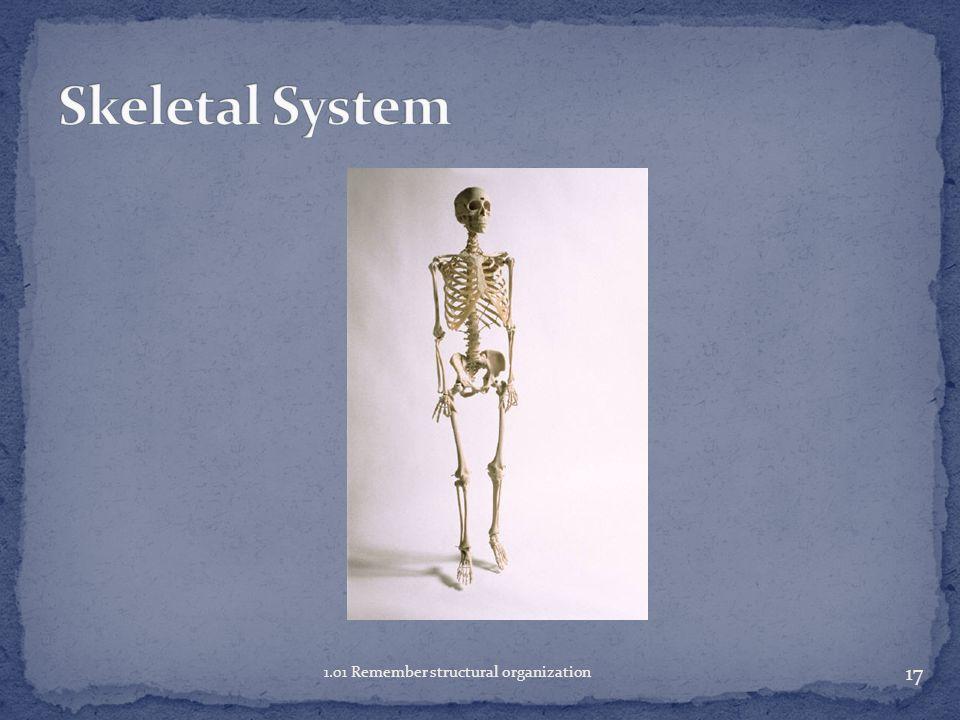 Skeletal System 1.01 Remember structural organization