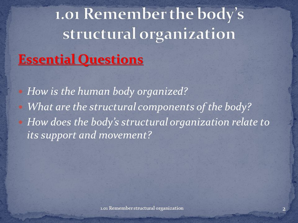 1.01 Remember the body's structural organization