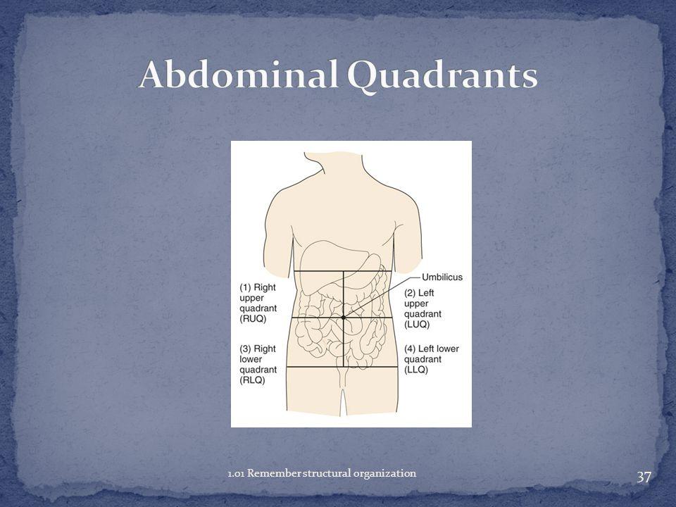 Abdominal Quadrants 1.01 Remember structural organization