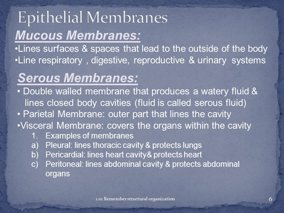 Epithelial Membranes Mucous Membranes: Serous Membranes: