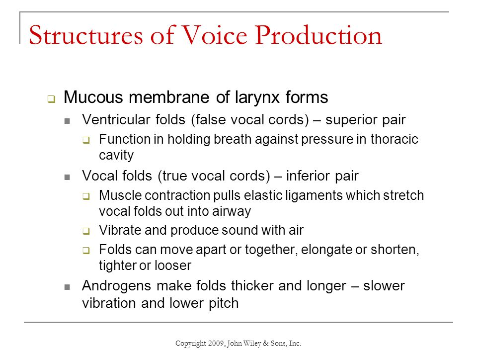Structures of Voice Production