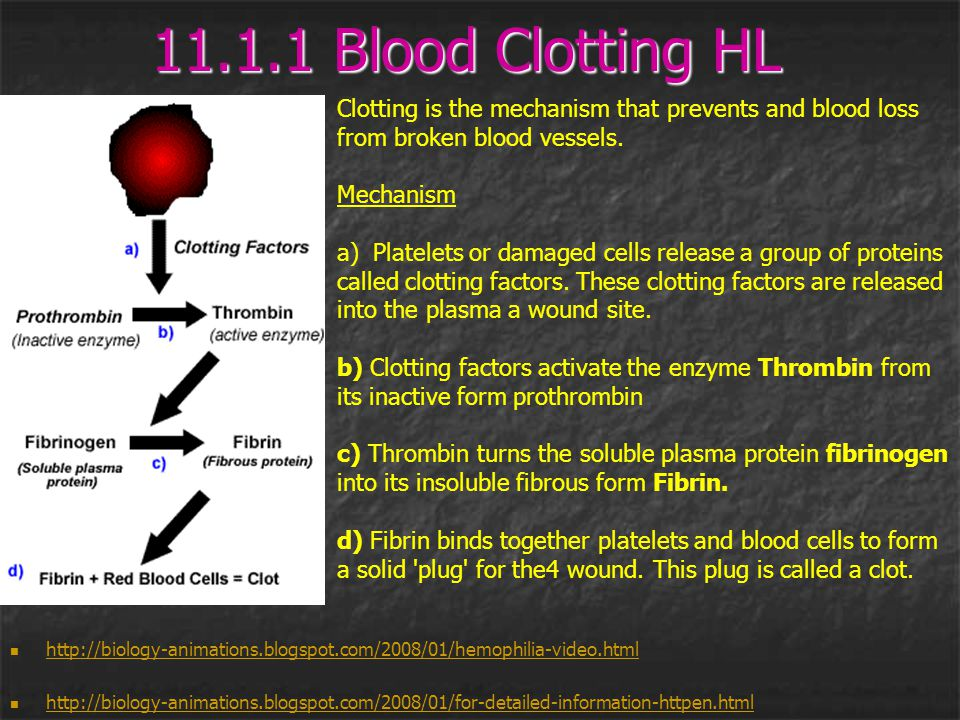 11.1.1 Blood Clotting HL Clotting is the mechanism that prevents and blood loss. from broken blood vessels.