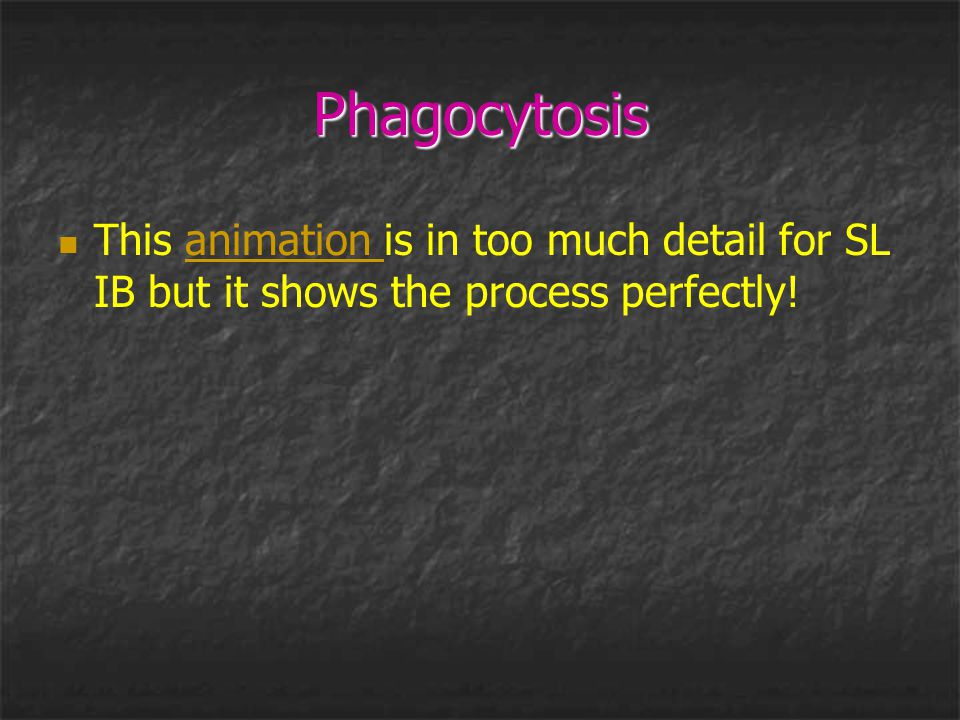 Phagocytosis This animation is in too much detail for SL IB but it shows the process perfectly!