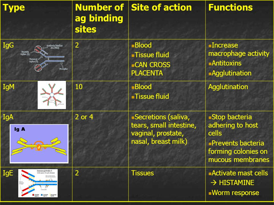 Number of ag binding sites Site of action Functions