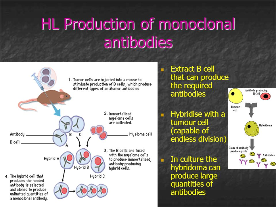 HL Production of monoclonal antibodies