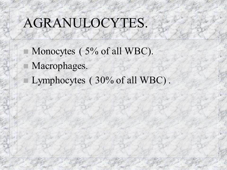 AGRANULOCYTES. Monocytes ( 5% of all WBC). Macrophages.