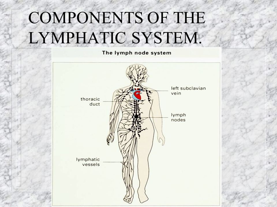 COMPONENTS OF THE LYMPHATIC SYSTEM.
