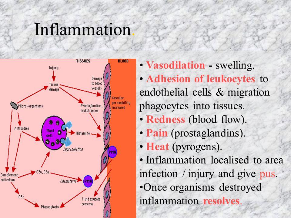 Inflammation. Vasodilation - swelling.