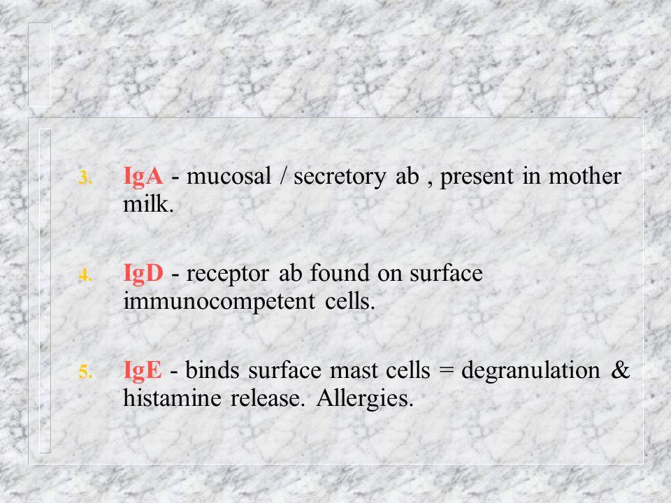 IgA - mucosal / secretory ab , present in mother milk.