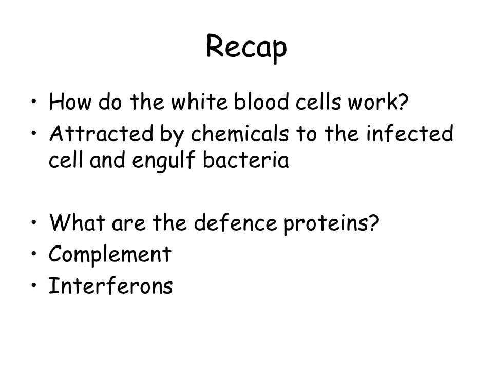 Recap How do the white blood cells work