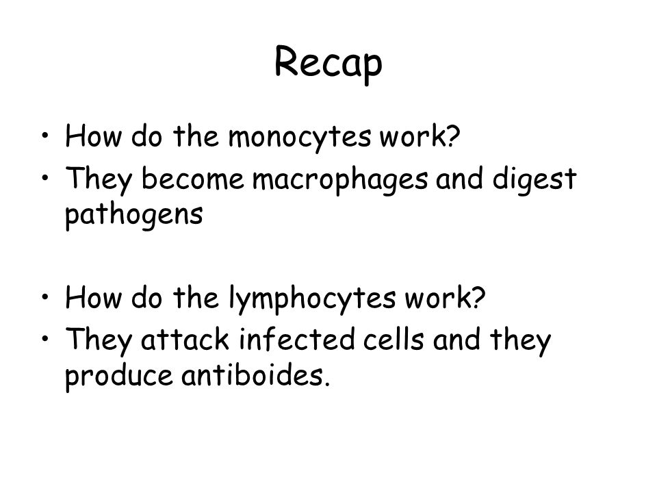 Recap How do the monocytes work