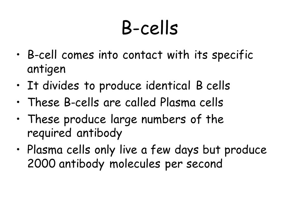 B-cells B-cell comes into contact with its specific antigen