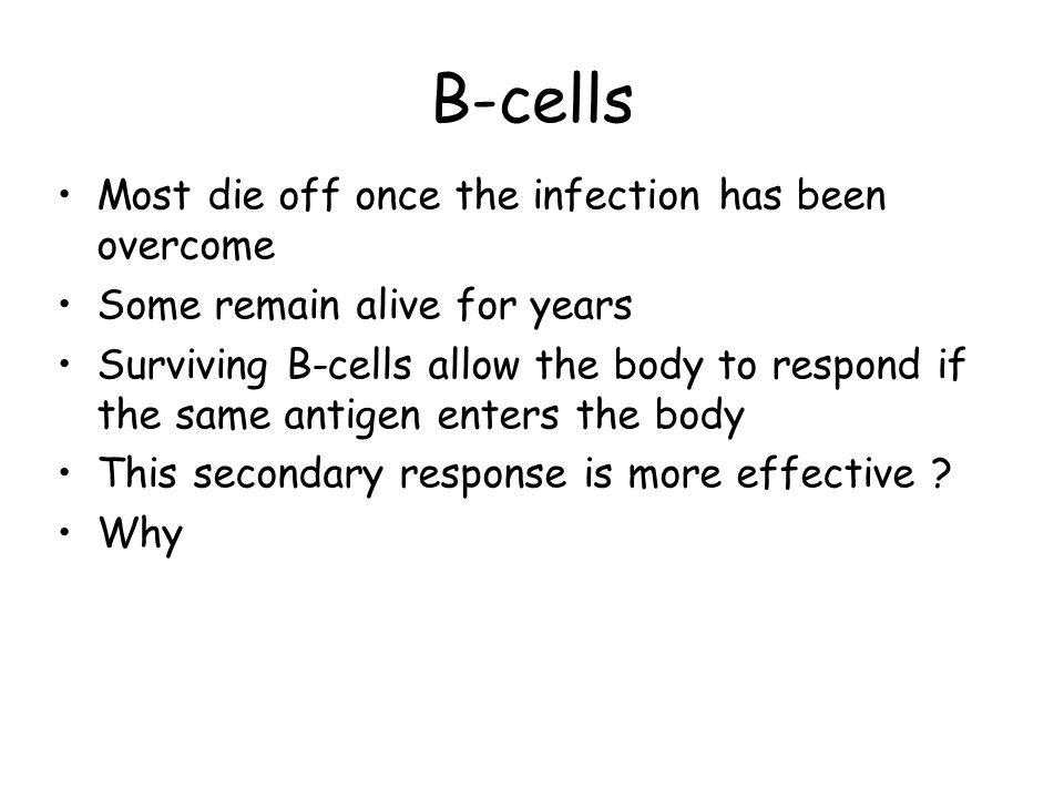B-cells Most die off once the infection has been overcome