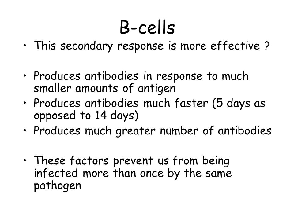 B-cells This secondary response is more effective