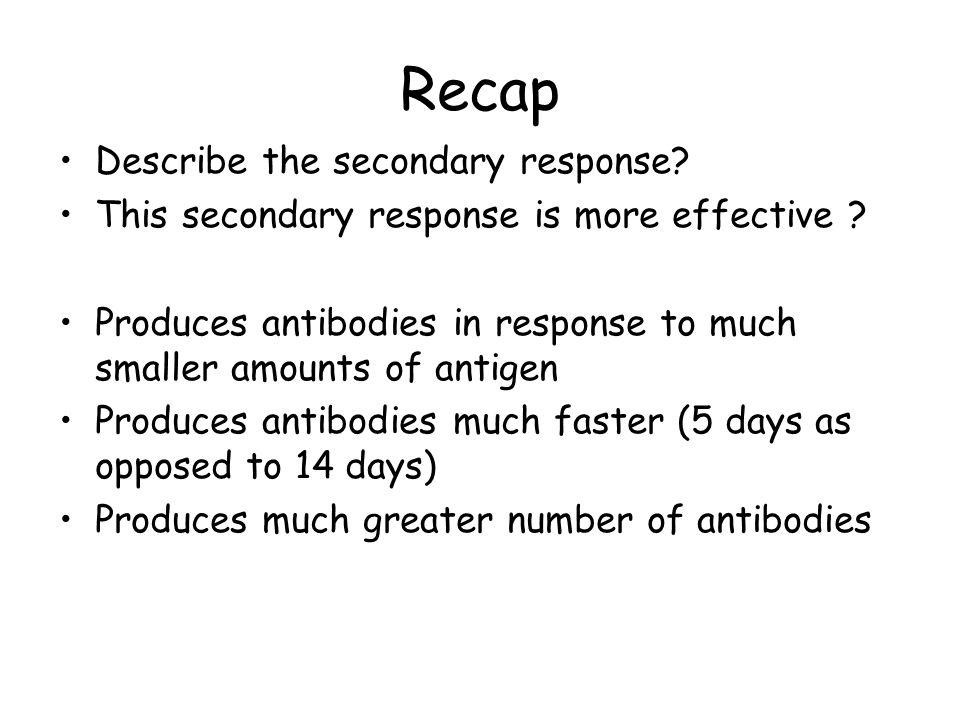 Recap Describe the secondary response