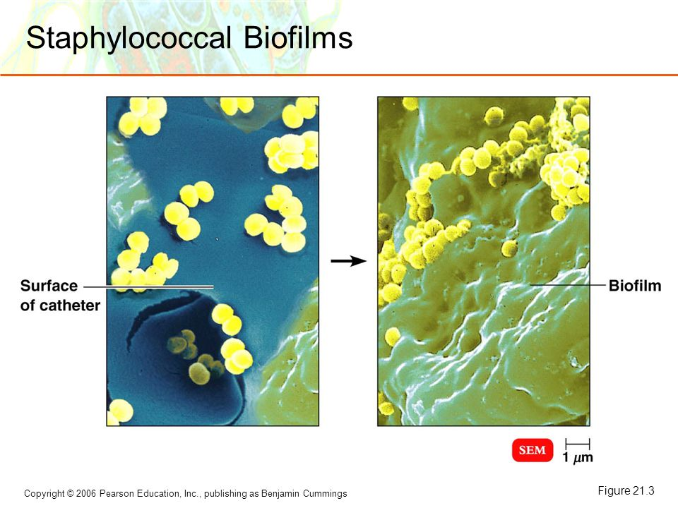 Staphylococcal Biofilms