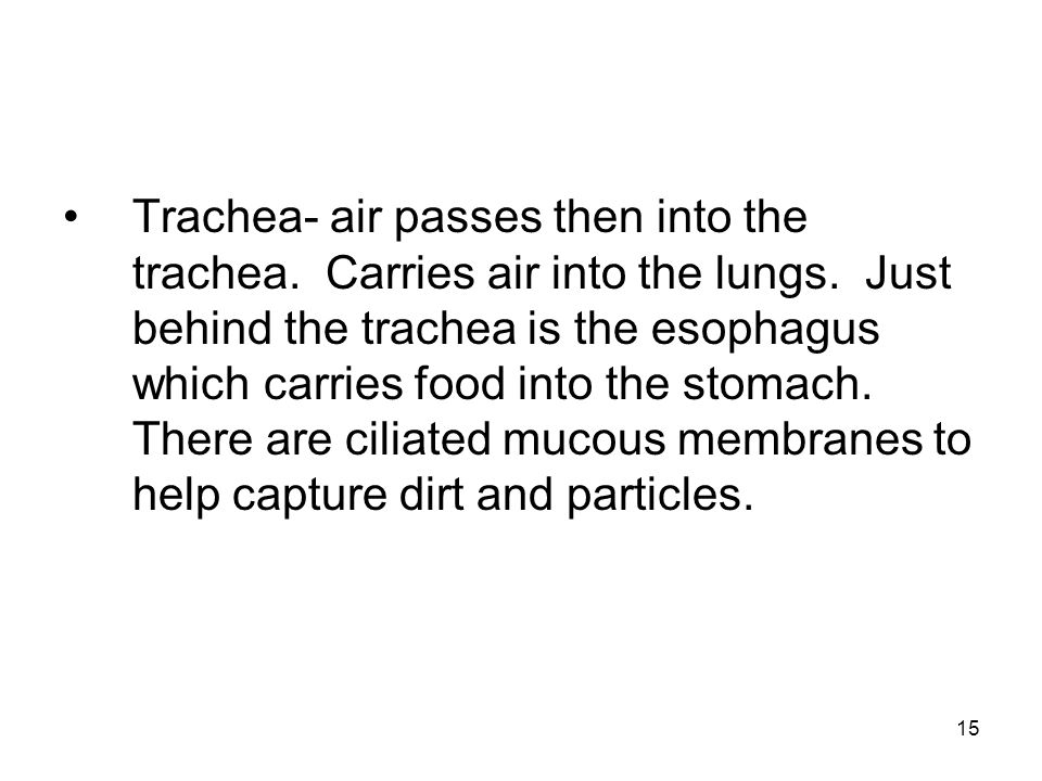 Trachea- air passes then into the trachea. Carries air into the lungs