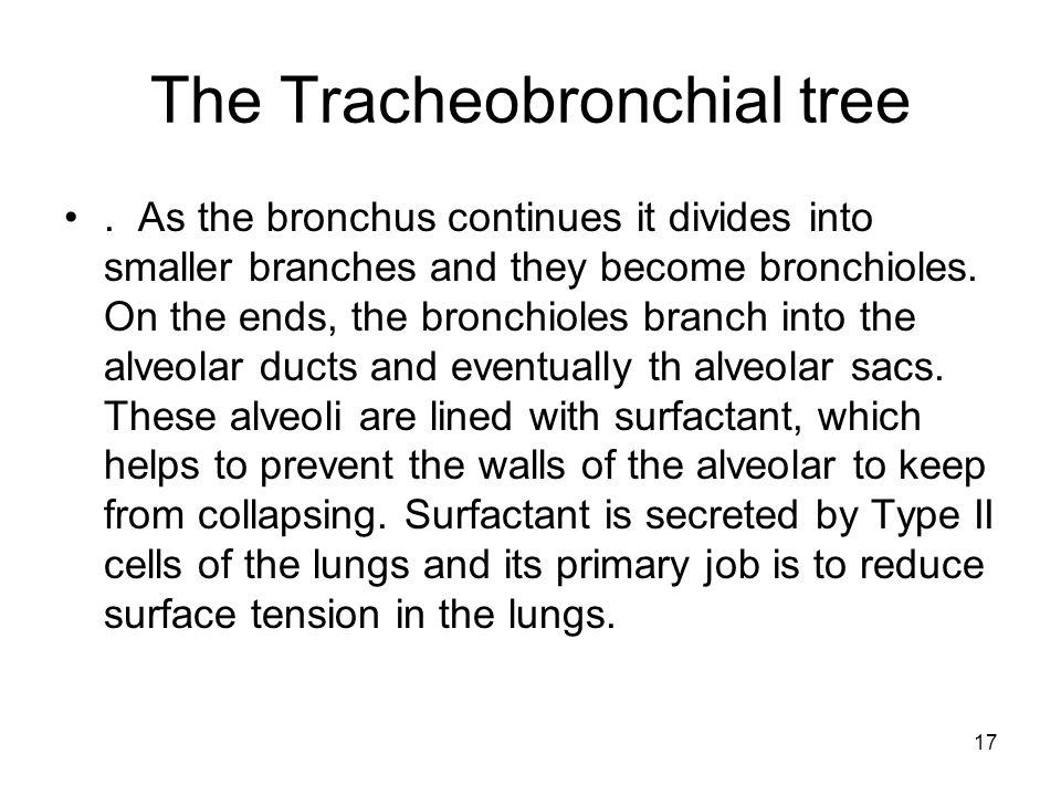 The Tracheobronchial tree