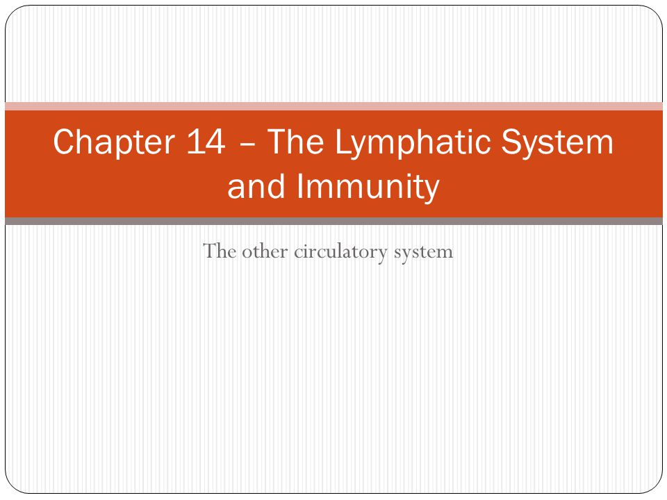 Chapter 14 – The Lymphatic System and Immunity