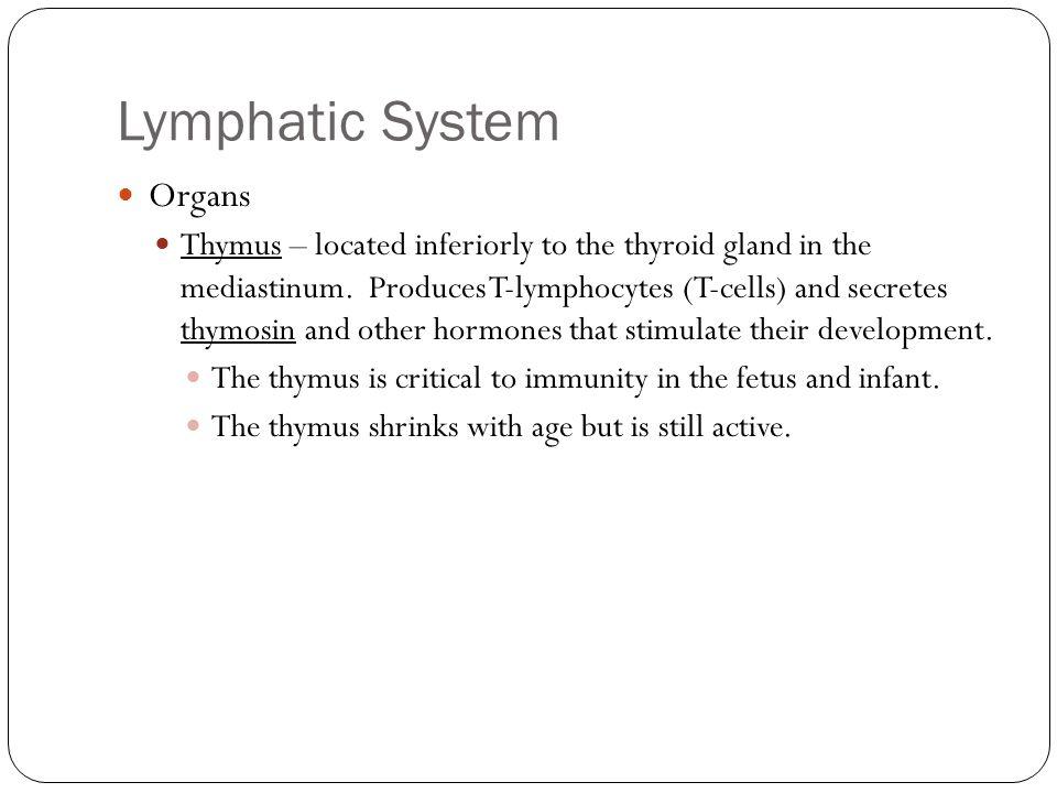 Lymphatic System Organs