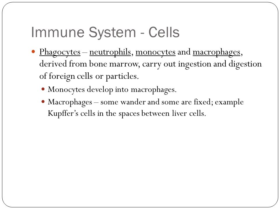 Immune System - Cells