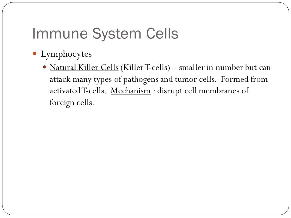 Immune System Cells Lymphocytes