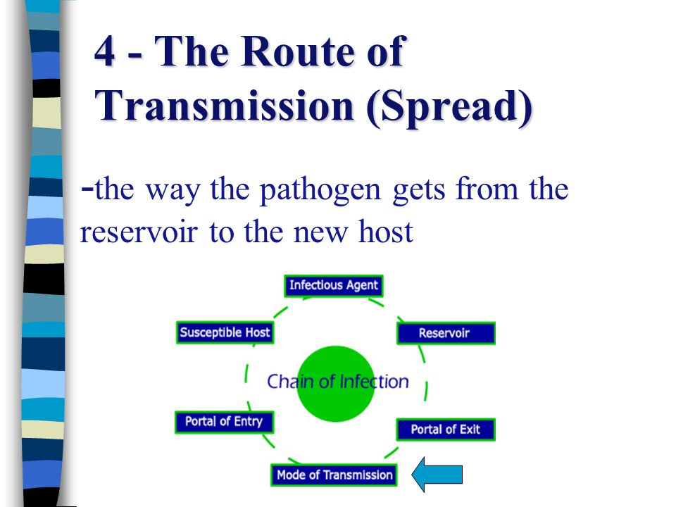 4 - The Route of Transmission (Spread)