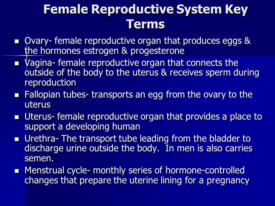 Female Reproductive System Key Terms