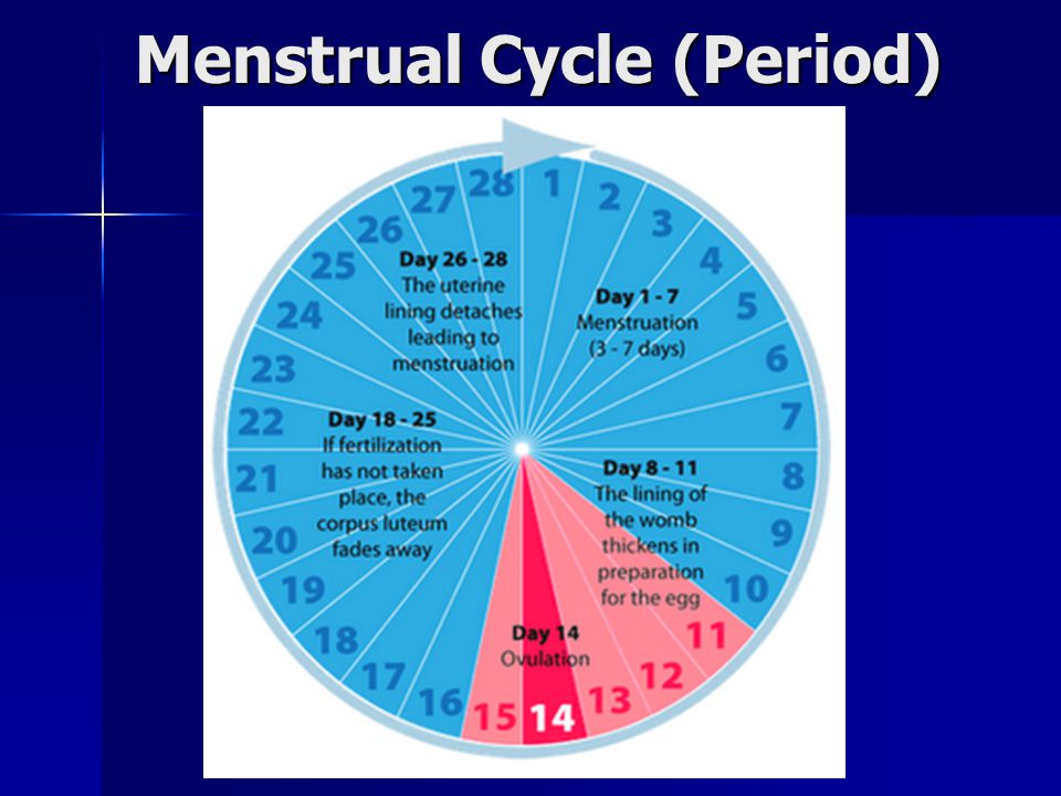 Menstrual Cycle (Period)