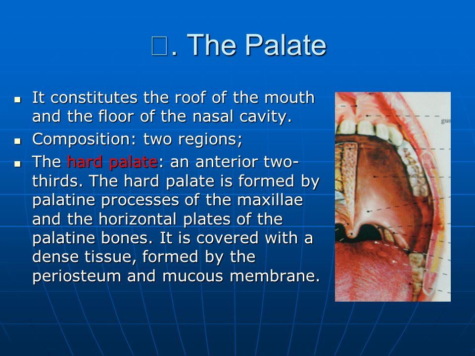 Ⅲ. The Palate It constitutes the roof of the mouth and the floor of the nasal cavity. Composition: two regions;