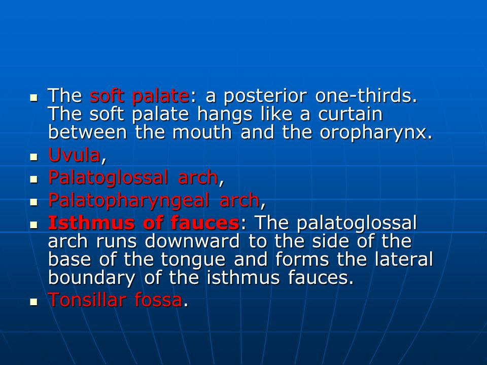 The soft palate: a posterior one-thirds