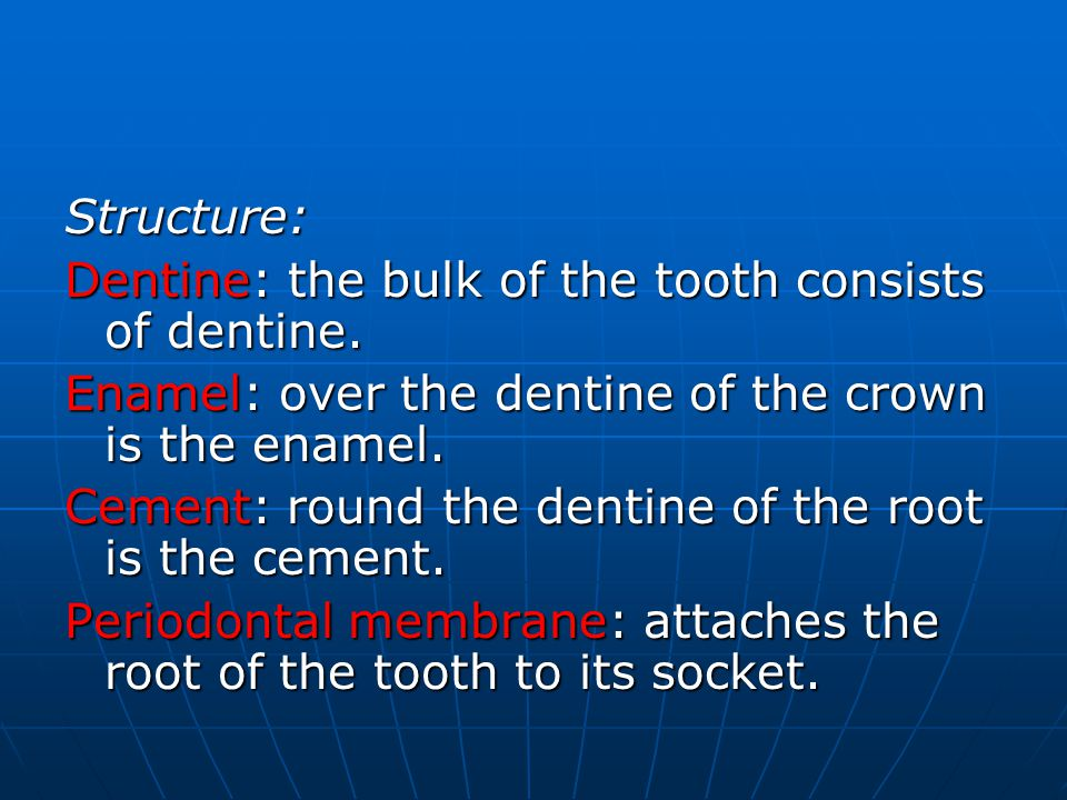 Structure: Dentine: the bulk of the tooth consists of dentine. Enamel: over the dentine of the crown is the enamel.