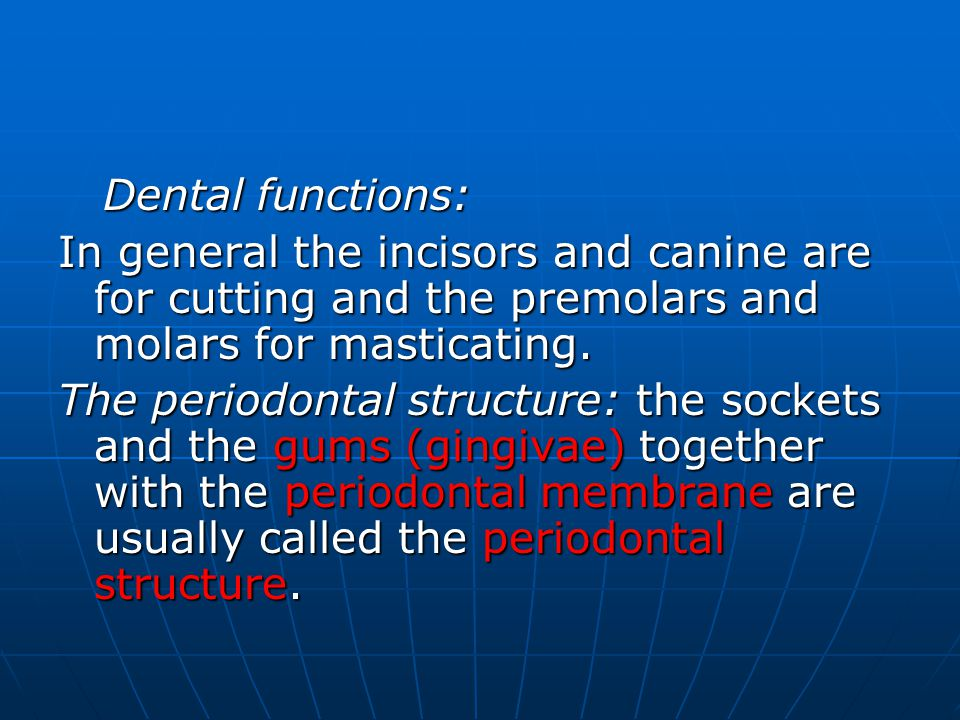 Dental functions: In general the incisors and canine are for cutting and the premolars and molars for masticating.