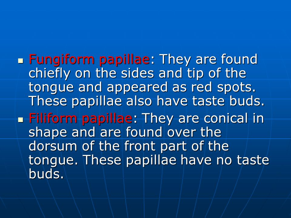 Fungiform papillae: They are found chiefly on the sides and tip of the tongue and appeared as red spots. These papillae also have taste buds.