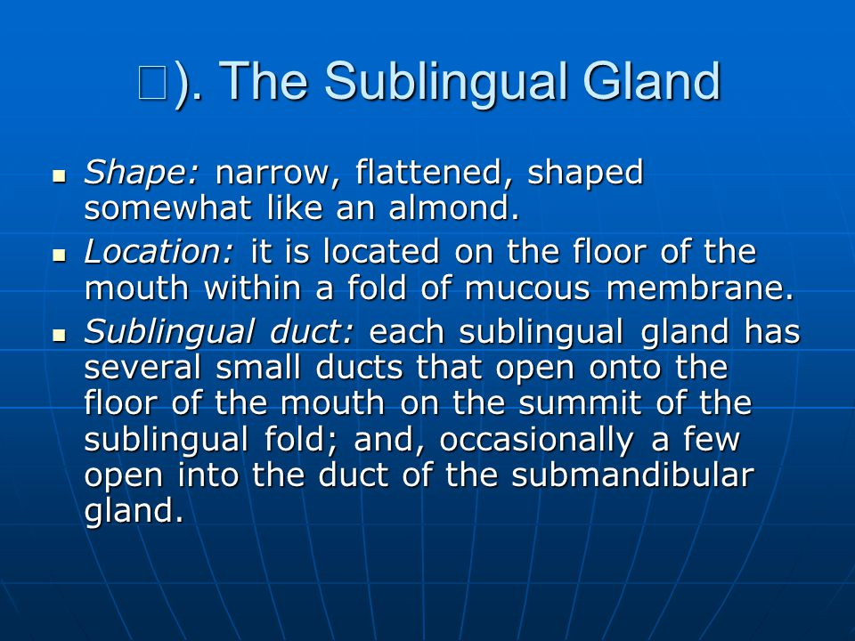 Ⅲ). The Sublingual Gland