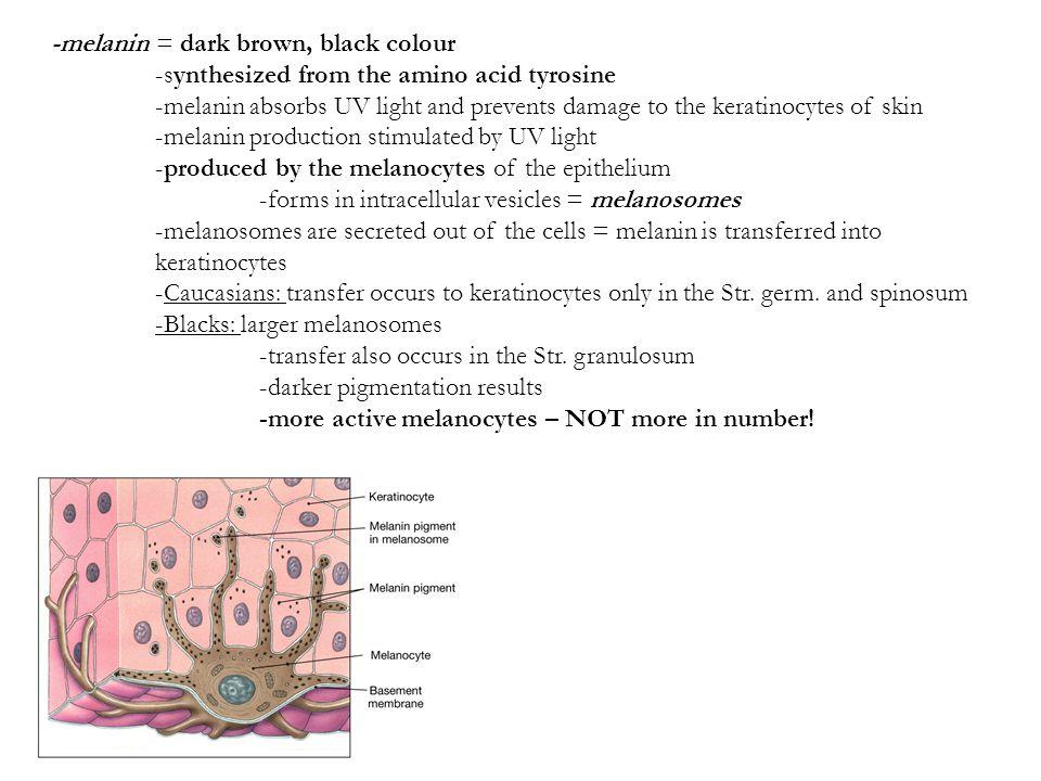 -melanin = dark brown, black colour