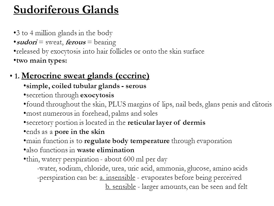 Sudoriferous Glands 3 to 4 million glands in the body